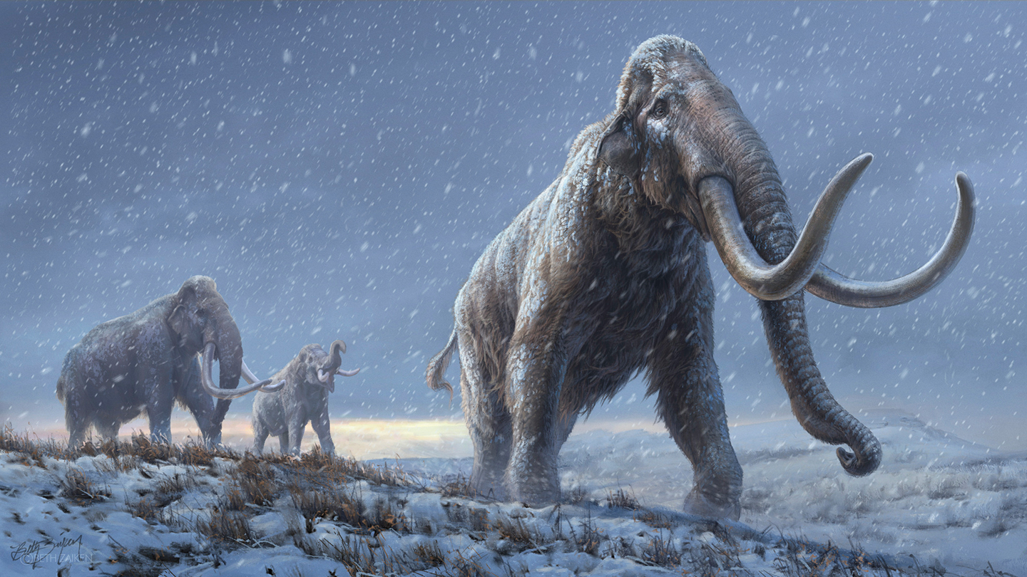 World's Oldest DNA Recovered From Million-Year-Old Siberian Mammoth Teeth
