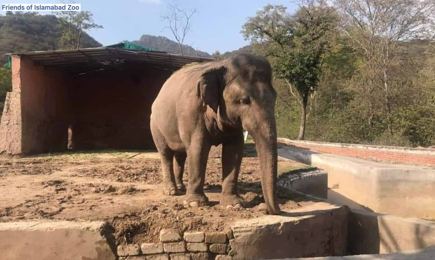 """How Cher Helped Free """"The World's Loneliest Elephant"""""""