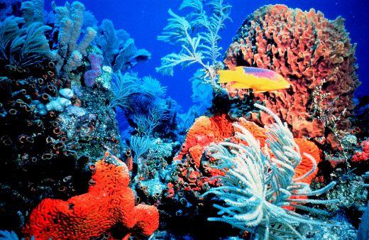 Coralreef-medium