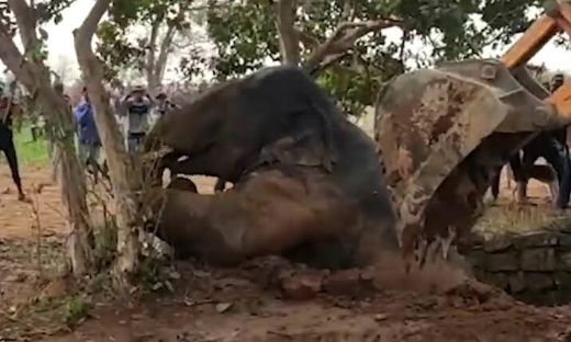 Rescuers In Northeast India Use The Archimedes' Principle To Save An Elephant In Distress