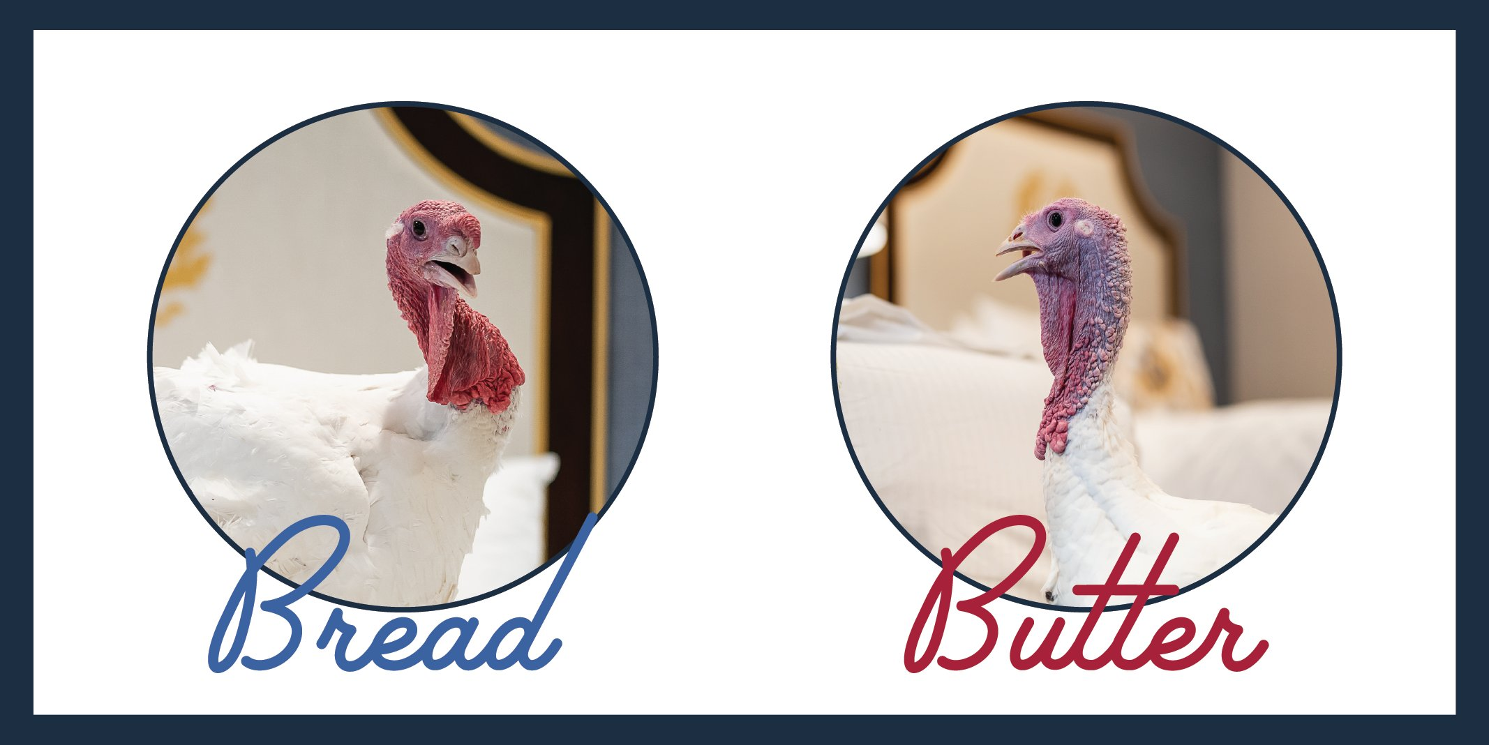 """Pardoned Turkeys """"Bread"""" And """"Butter"""" Trot Away To Freedom"""