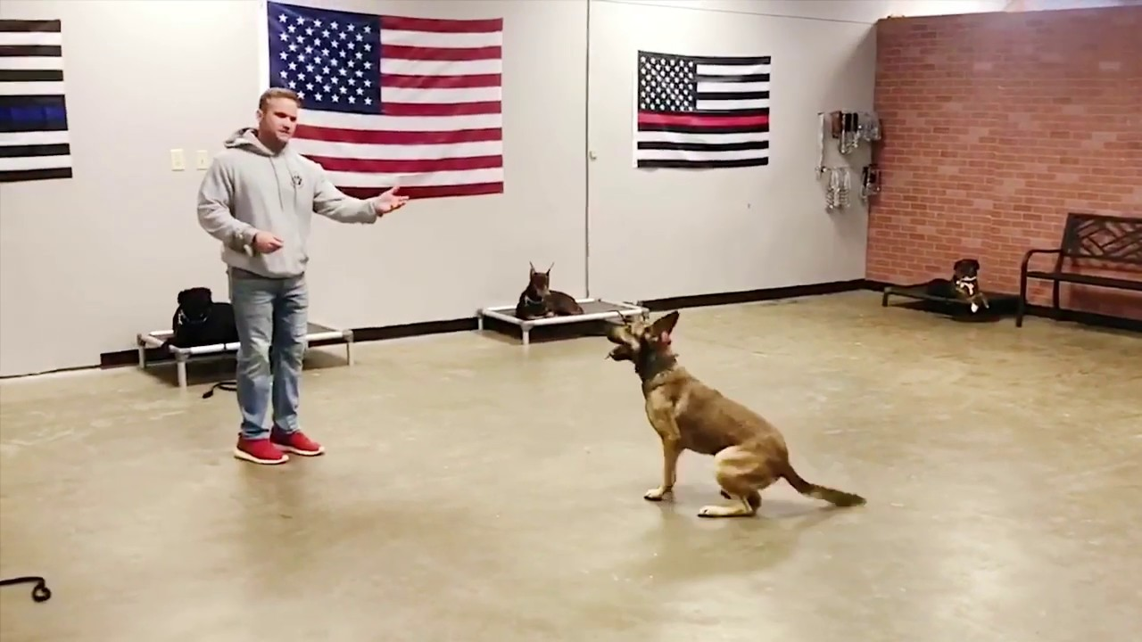 Overeager Service Dog Ryker Has Come A Long Way Since His Hilarious Training Test Video