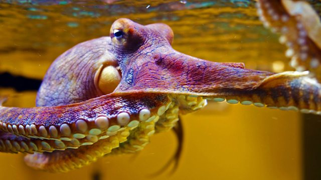 "Researcher Captures Mesmerizing Video Of Pet Octopus Changing Color While ""Dreaming"""