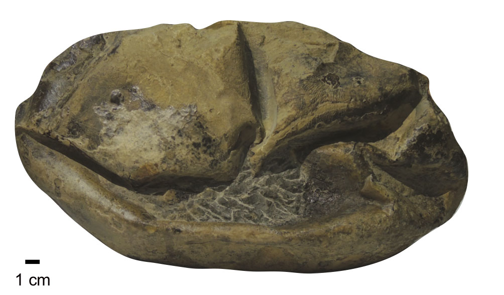 Mysterious Fossil Found In Antarctica Is A Giant Reptile Egg