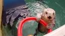 Thumb_eddie-the-hoop-shooting-sea-otter