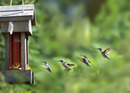 Thumb_picture-animal-hummingbird-landing-creativity2